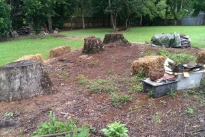 Sustainable Accommodation The No Dig Organic garden before the workshop Maleny Accommodation