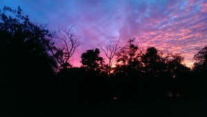 farmstay maleny at sunset