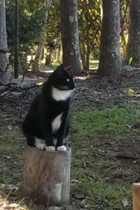 Pet friendly McCarthy Lake house Accommodation - Jasper the cat