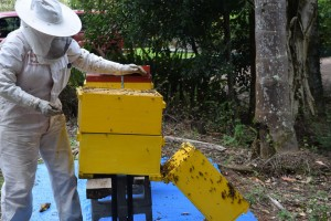 Maleny Sustainable ethical Accommodation maintaining beehives