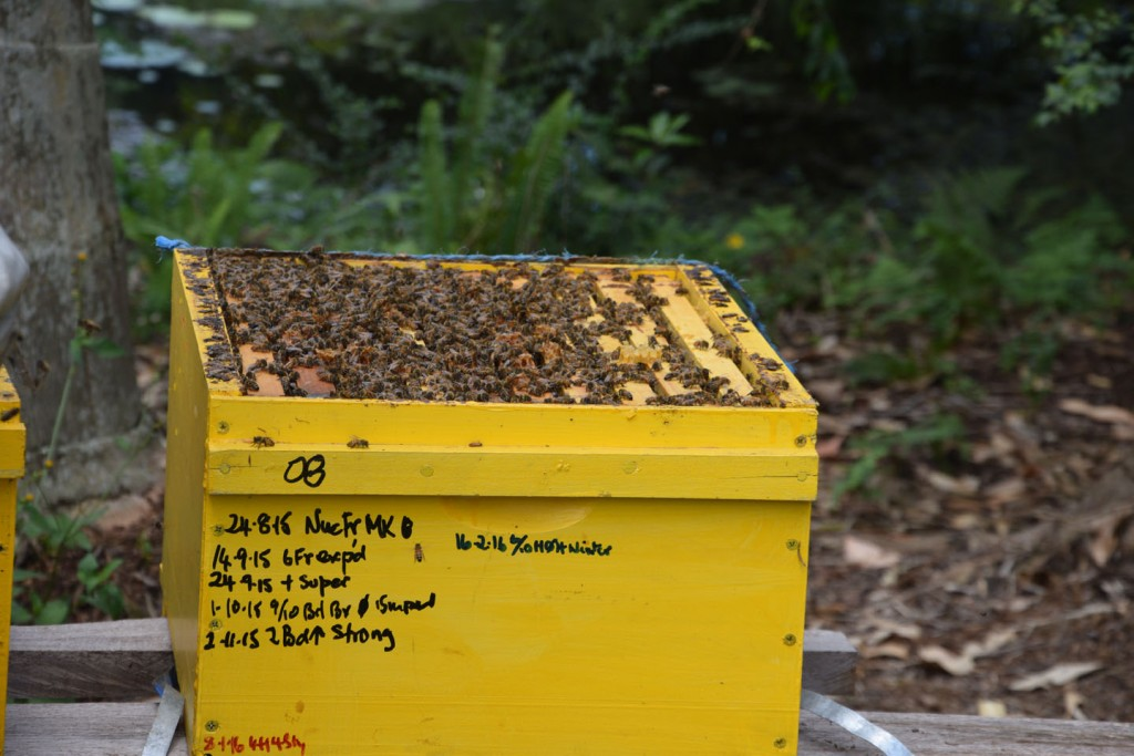 Maleny Sustainable Accommodation maintaining beehives