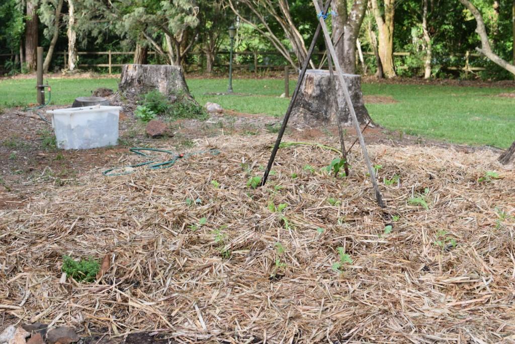McCarthy Lake House No Dig Garden