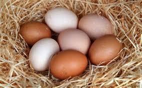 Fresh Eggs Maleny McCarthy Lake House